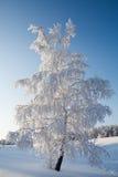 Paysage d'hiver, bouleau, gel, neige Photo libre de droits