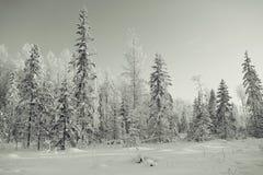 Paysage d'hiver dans la forêt image stock