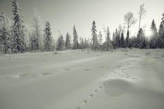 Paysage d'hiver dans la forêt images libres de droits