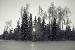 Paysage d'hiver dans la forêt images stock