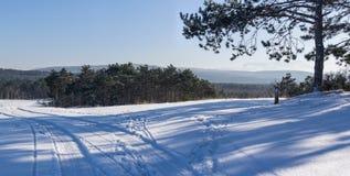 Paysage d'hiver dans la forêt Photos stock