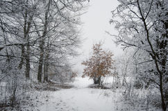 Paysage d'hiver dans la forêt avec la neige et l'arbre coloré Image stock