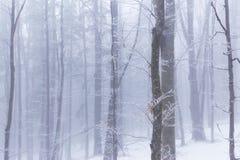 Paysage d'hiver dans la forêt avec les arbres et le brouillard de bouleau Photographie stock libre de droits