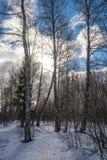 Paysage d'hiver dans le contre-jour Photo stock