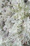 Paysage d'hiver dans le gel un jour ensoleillé Photographie stock libre de droits