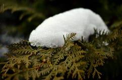 Paysage d'hiver de flanc de montagne Photo stock