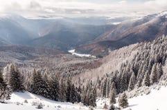 Paysage d'hiver de forêt Photo libre de droits