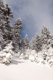 Paysage d'hiver de forêt Photographie stock libre de droits