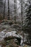 Paysage d'hiver de forêt avec la couverture d'herbe verte avec la même neige image stock