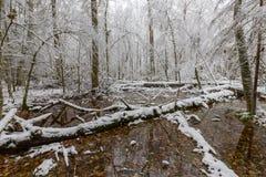Paysage d'hiver de forêt naturelle avec les chênes morts images libres de droits