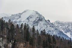 Paysage d'hiver de montagnes de Bucegi Photo stock