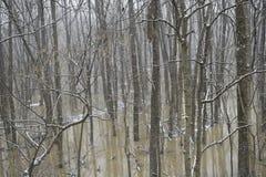 Paysage d'hiver dedans avec une rivière en crue image stock