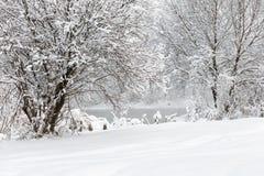 Paysage d'hiver des arbres et de la rivière dans un matin brumeux photographie stock