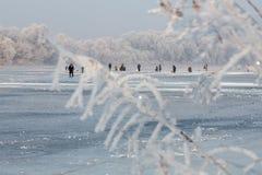 Paysage d'hiver des arbres givrés, neige blanche en parc de ville Arbres couverts de neige Photo stock