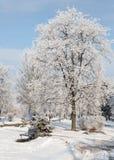 Paysage d'hiver des arbres givrés, neige blanche en parc de ville Arbres couverts de neige Images stock