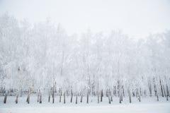 Paysage d'hiver des arbres givrés sur le fond brumeux Photos libres de droits