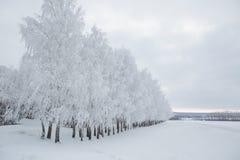 Paysage d'hiver des arbres givrés sur le fond brumeux Photographie stock