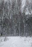 Paysage d'hiver en Belgique Images libres de droits