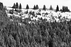 Paysage d'hiver en montagnes de Bucegi Images libres de droits