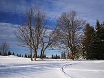 Paysage d'hiver en montagnes de Jizera Images stock