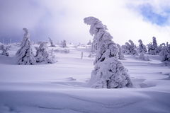 Paysage d'hiver en parc national de Krkonose Images stock