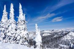 Paysage d'hiver en poisson à chair blanche, Montana Photographie stock libre de droits