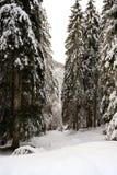 Paysage d'hiver en Val Canali Photo libre de droits