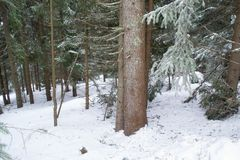 Paysage d'hiver haut dans les montagnes photos stock