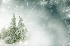 Paysage d'hiver - la neige a couvert les arbres et le ciel d'étoiles Image libre de droits