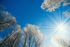 Paysage d'hiver - nature de forêt d'hiver sous la lumière du soleil lumineuse avec les arbres givrés Photographie stock libre de droits