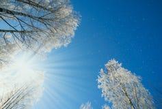 Paysage d'hiver - nature de forêt d'hiver sous la lumière du soleil lumineuse avec les arbres givrés Images stock