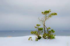 Paysage d'hiver par la mer Images libres de droits