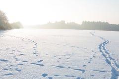 Paysage d'hiver sous la neige blanche Photo stock