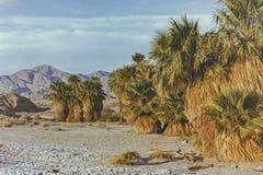 Paysage d'oasis de dix-sept paumes en parc de désert d'Anza Borrego en 1990 image stock