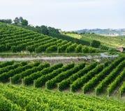 Paysage d'été dans Monferrato (Italie) Images libres de droits