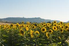Paysage d'été en Marches (Italie) Photographie stock libre de droits