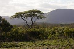 Paysage d'Umfolozi Image libre de droits