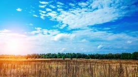 Paysage d'un champ vert sous un ciel coloré d'été pétillant au lever de soleil d'aube de coucher du soleil Ciel d'espace libre de Photo libre de droits