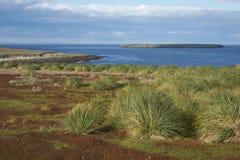 Paysage d'une île plus morne dans Falkland Islands Photo libre de droits