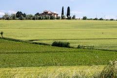 Paysage d'une colline verte Photos libres de droits