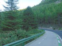 Paysage d'une forêt et d'une route photos libres de droits