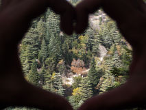 Paysage d'une forêt libanaise contenant beaucoup de cèdres Images libres de droits