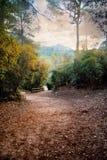 Paysage d'une vallée au coucher du soleil Images stock