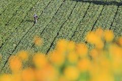 Paysage dans la ferme de Fushoushan de Taïwan Images libres de droits