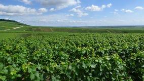 Paysage dans la région de champagne images stock