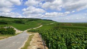 Paysage dans la région de champagne images libres de droits