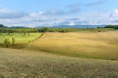 Paysage dans la région de chianti dans la province de Sienne tuscany l'Italie photographie stock libre de droits