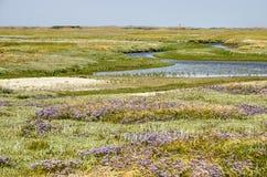 Paysage dans la région de Slufter de Texel photographie stock libre de droits