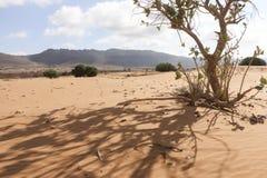 Paysage dans le désert du Sahara, Marocco photos libres de droits