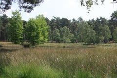 Paysage dans le Néerlandais Limbourg Photo stock